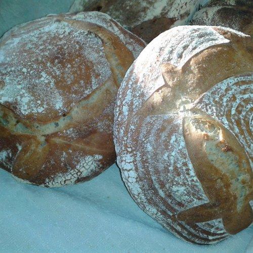 Successful sourdough loaves.