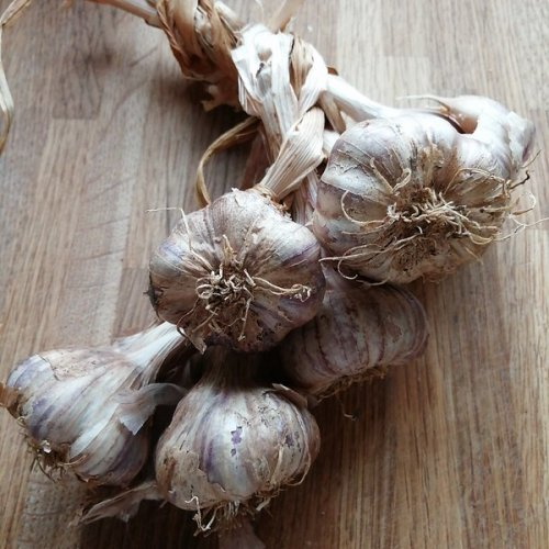 Plaited garlic.