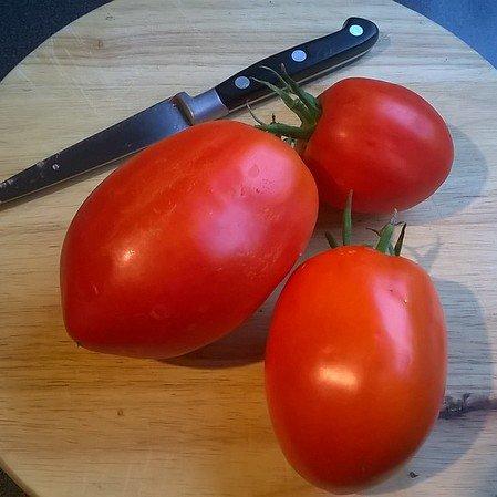 Classic Roma plum tomatoes.  Heavenly.