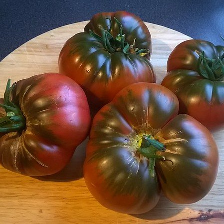 Dark purple beefsteaks: delicious but heavy and needing support on the vine.