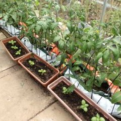 Do you have a sunny outdoor spot or greenhouse?