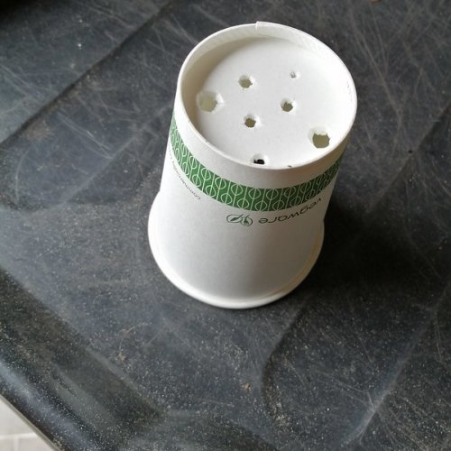 Poke holes in a paper cup for drainage.
