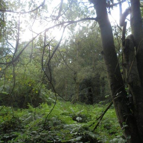 An English rainforest.