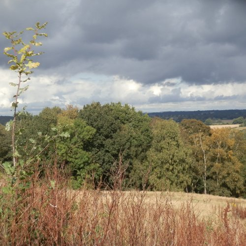 Heavy clouds over an oak sapling, carried as an acorn from the wood below and planted by a jay.
