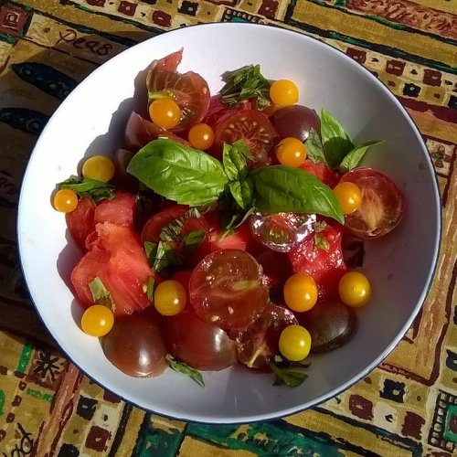 Red, purple and yellow tomatoes of all shapes and sizes with home-grown basil.