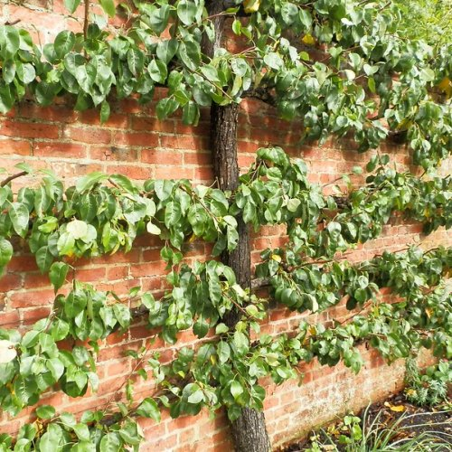 Pruned and trained – for now.