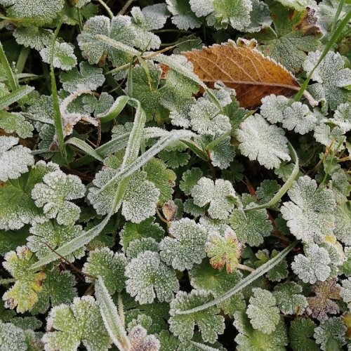 A frosted verge.